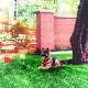 Електронни огради за кучета