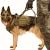 Тактическа тренировъчна жилетка за куче