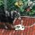 Pet Water Fountain – Поилка фонтан за куче във формата на лапа